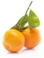 Logo de Fruits nules